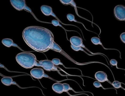 Tinh trùng sống được bao lâu
