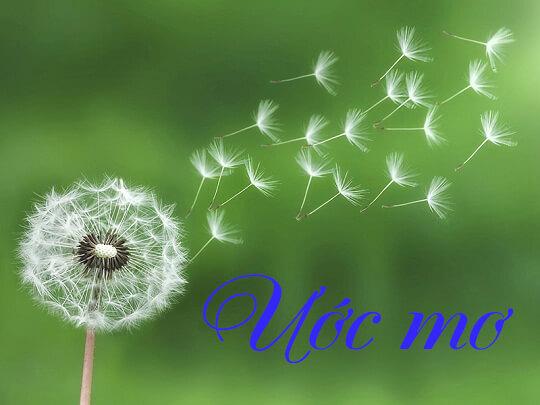 Ước mơ nghĩa là gì